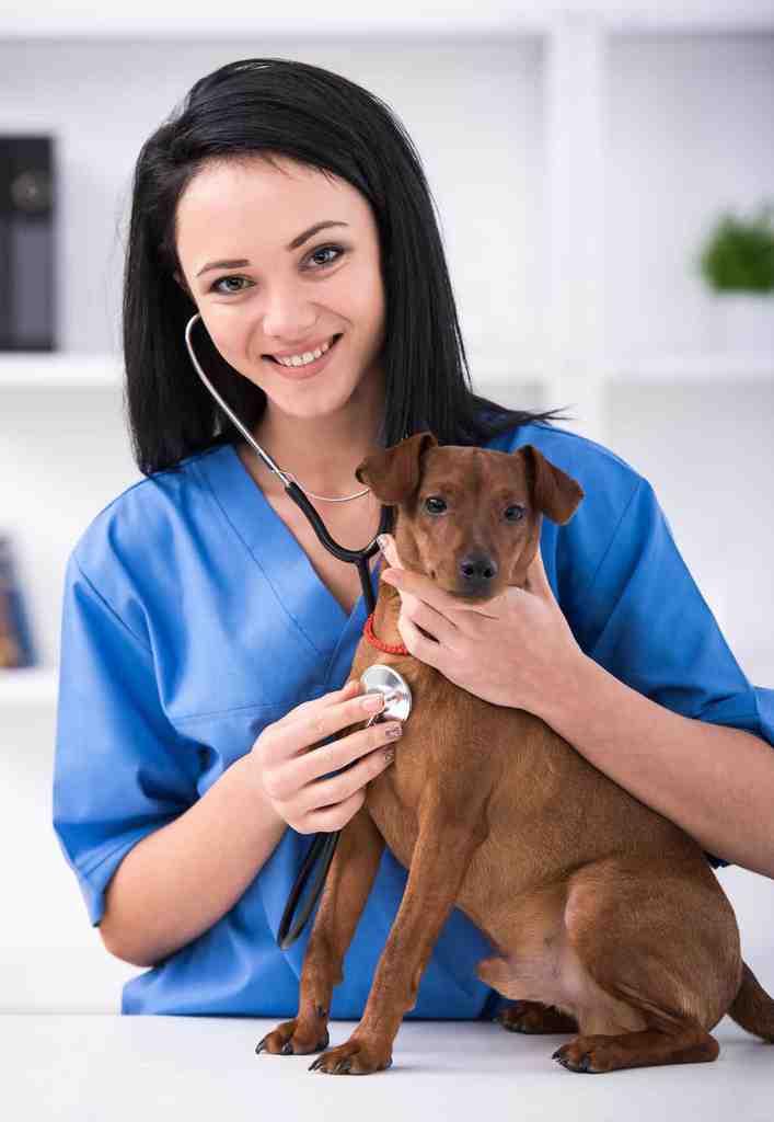 Canine Health Academy Vet Nurse Courses 2 (1)