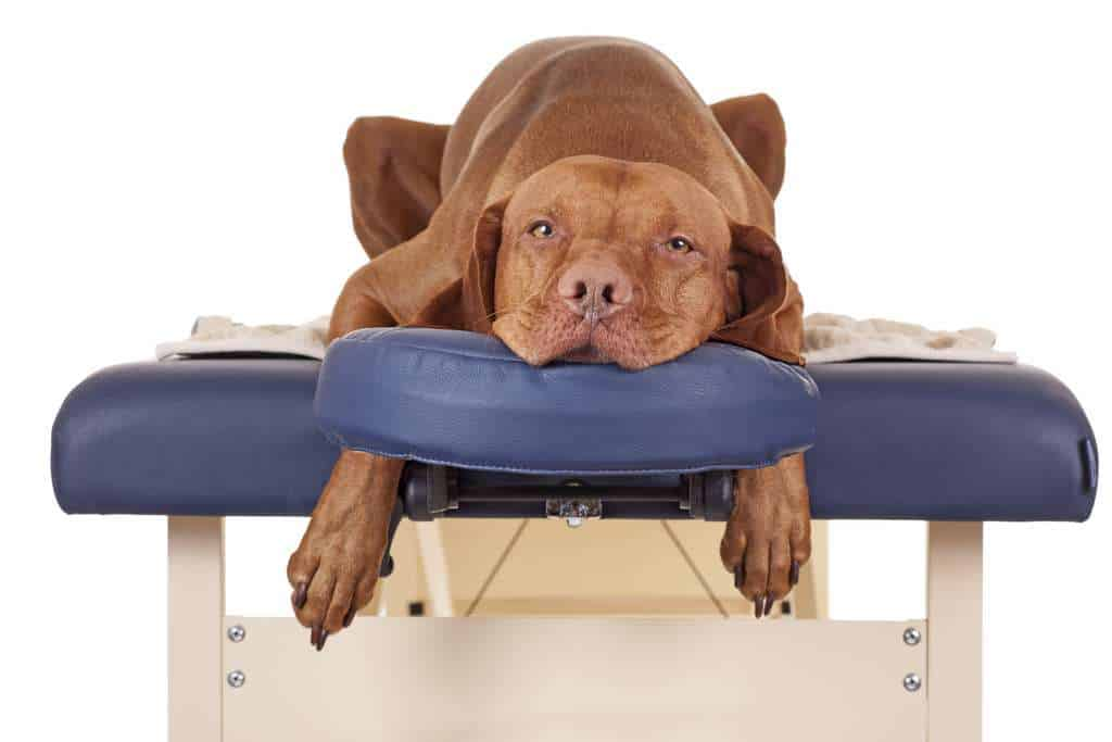 Canine Massage For Dog Owners By Michelle Monk at Canine Health and Wellbeing Academy Main Image